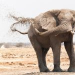 keeping your sanity, travel, blog, travelstart, botswana, leopard, africa, animals, adventure, elephant
